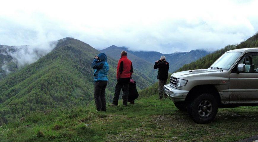 La berrea en Asturias
