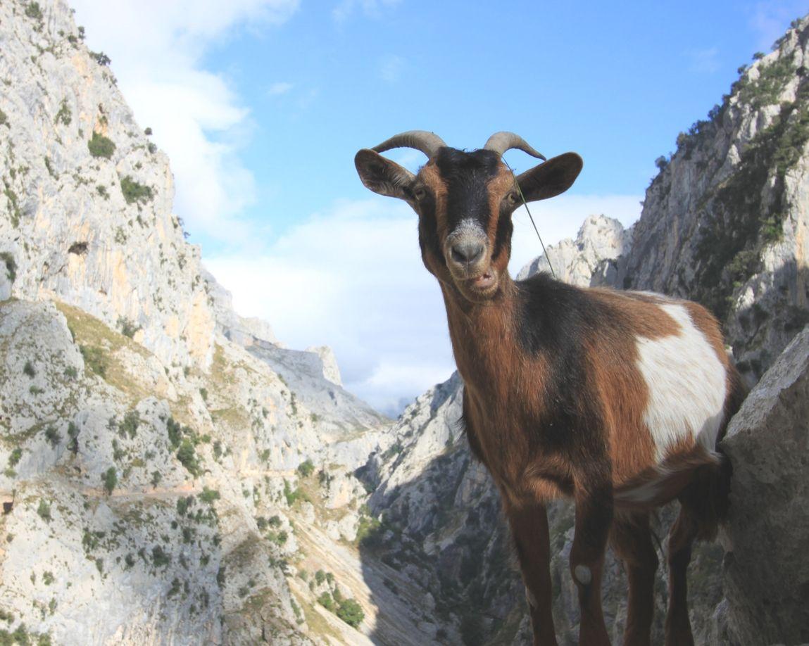 Treking por el Parque Nacional de los Picos de Europa