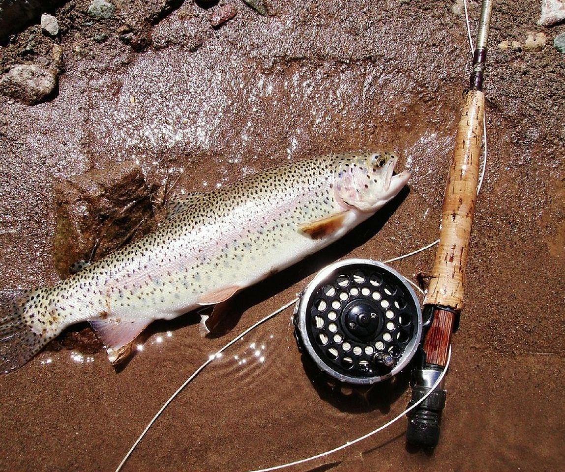 Curso Pesca trucha en Asturias