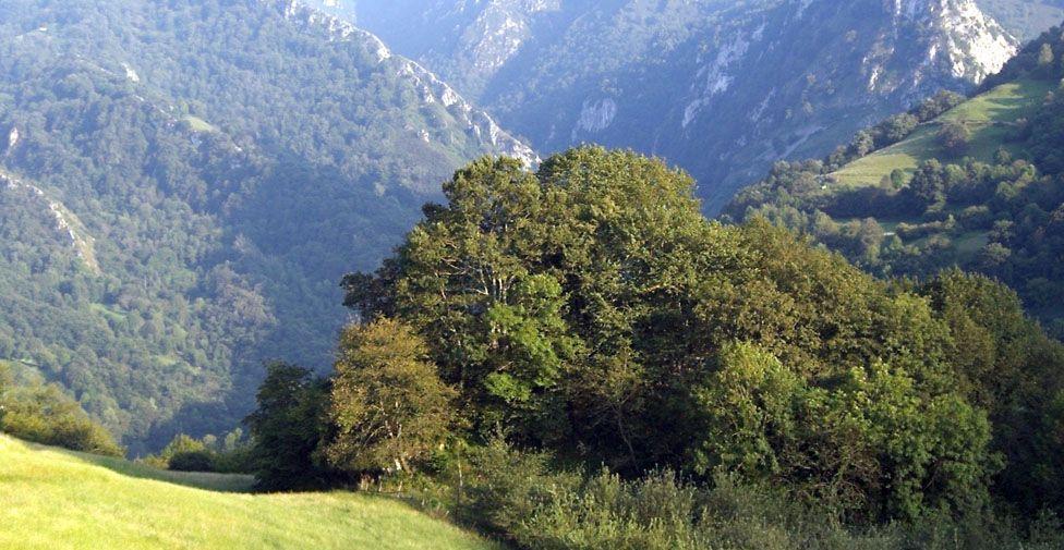 Bosquecillo del Valle Parque Ponga Axtur