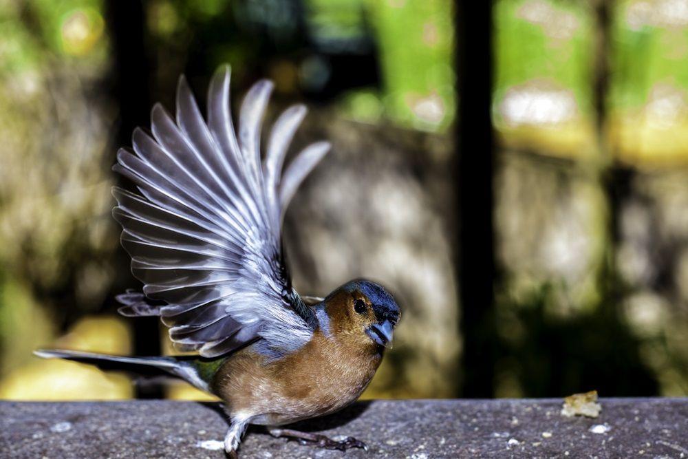 Curso de iniciación a la ornitología en los Picos de Europa