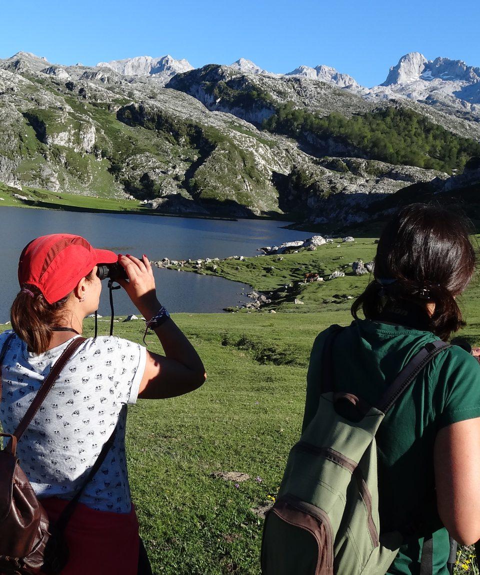 aves en los lagos de covadonga