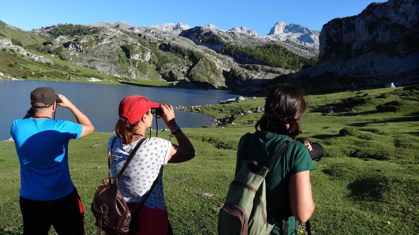 Observación de aves en los lagos de Covadonga, Picos de Europa