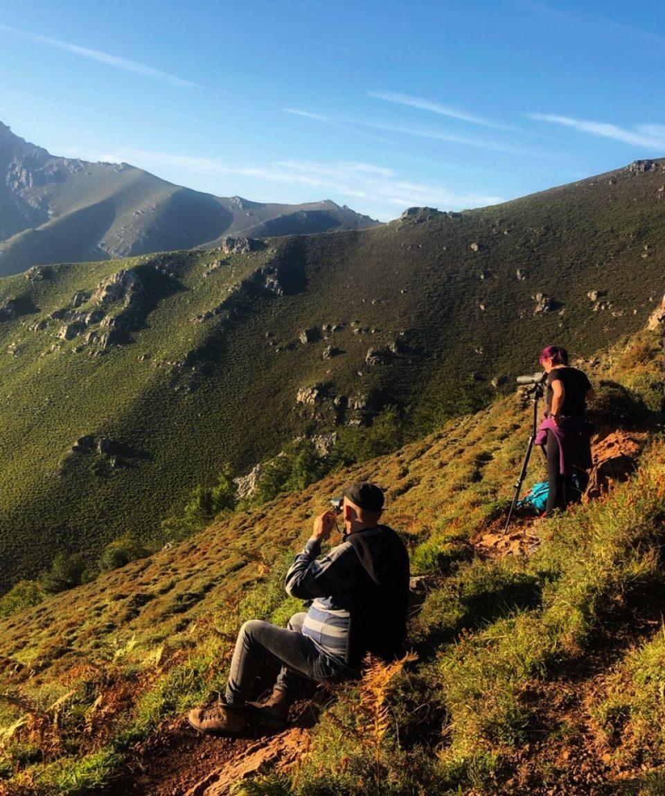 la berrea del ciervo en el concejo de aller asturias